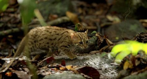 The World's Smallest Cat is Ridiculously Adorable and