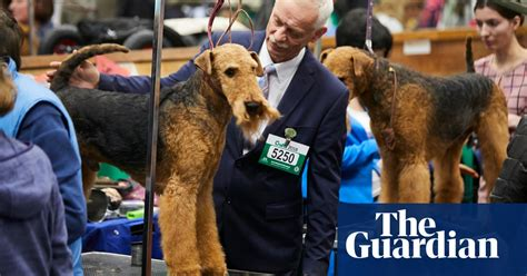Prize pooches and proud owners: Crufts 2018 – in pictures