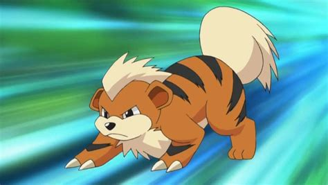 26 Awesome And Fascinating Facts About Growlithe From